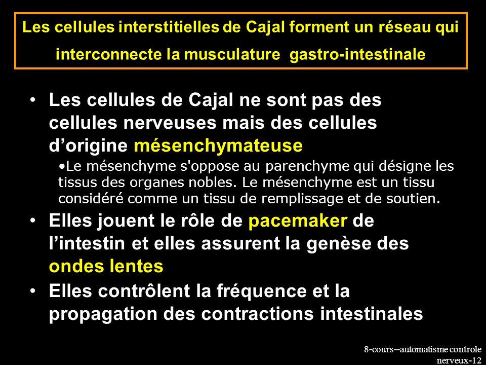 Les cellules interstitielles de Cajal forment un réseau qui interconnecte la musculature gastro-intestinale