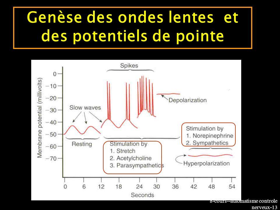 Genèse des ondes lentes et des potentiels de pointe