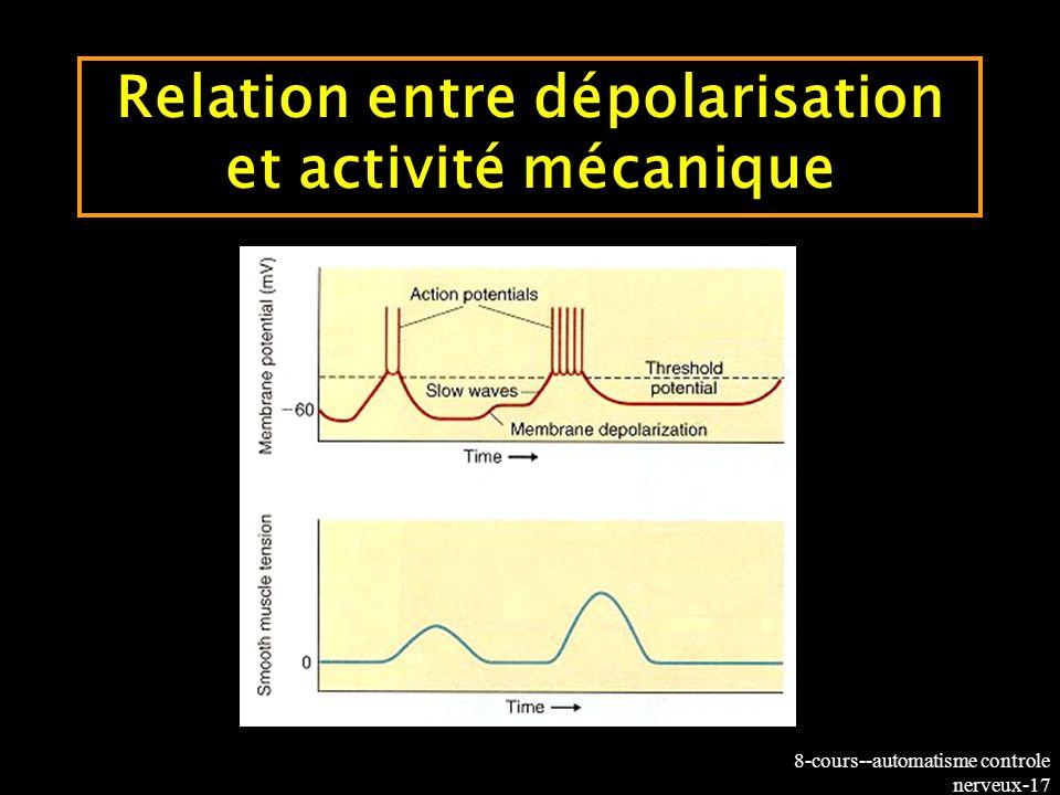 Relation entre dépolarisation et activité mécanique