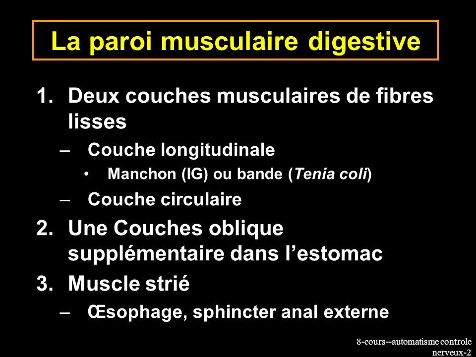 La paroi musculaire digestive