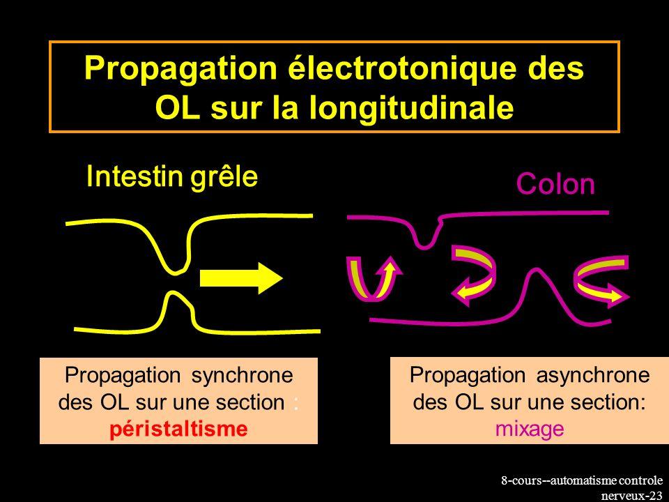 Propagation électrotonique des OL sur la longitudinale