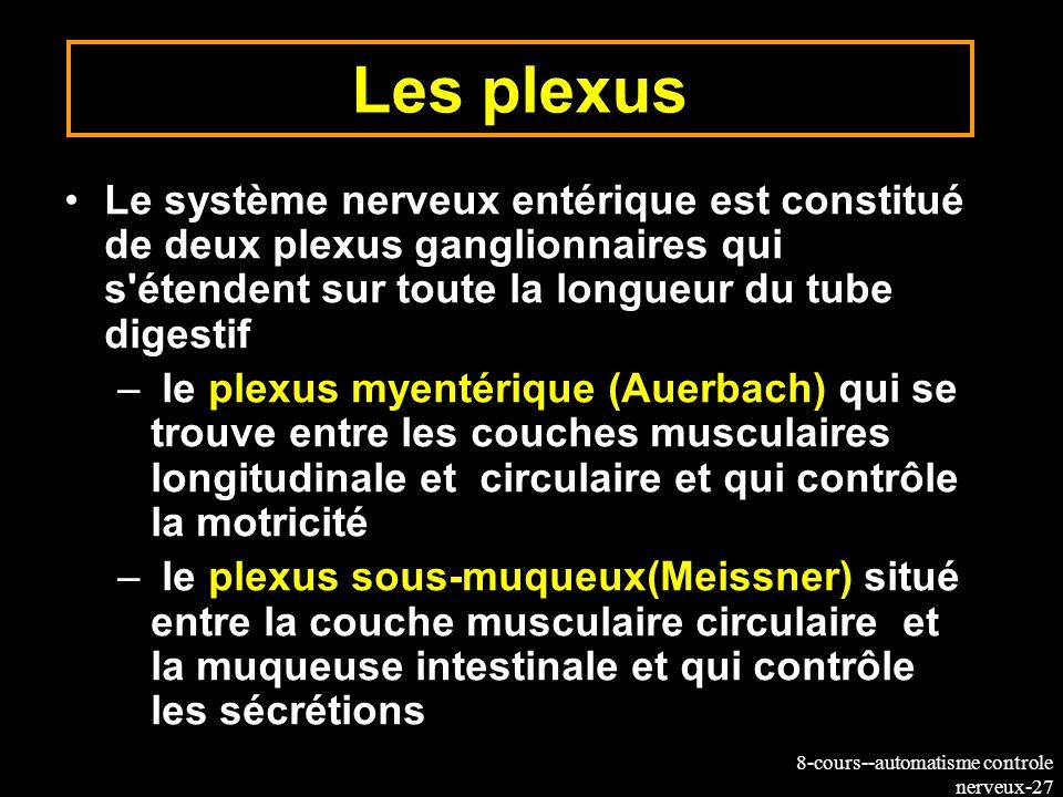 Les plexusLe système nerveux entérique est constitué de deux plexus ganglionnaires qui s étendent sur toute la longueur du tube digestif.