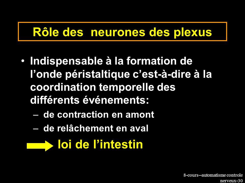 Rôle des neurones des plexus