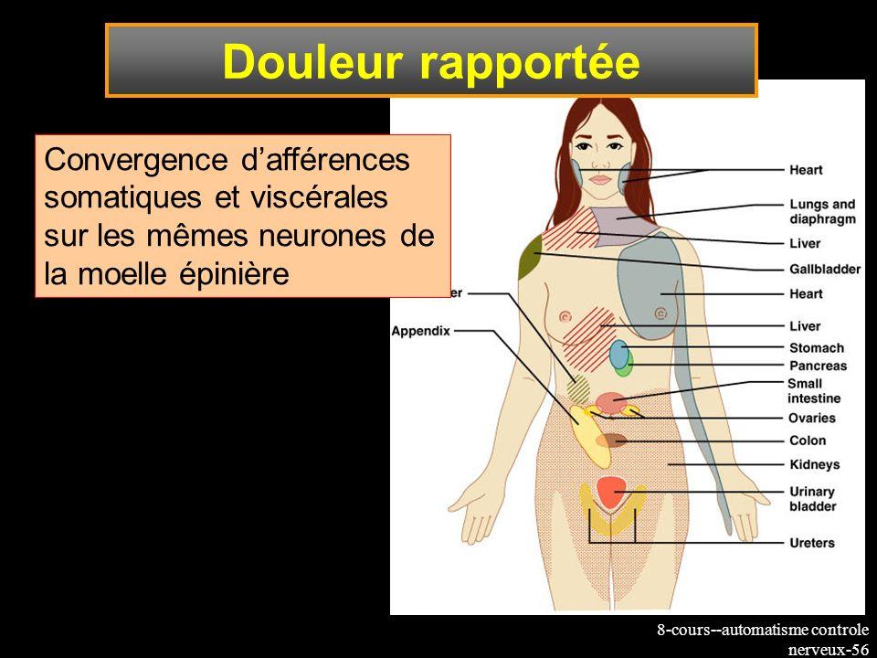 Douleur rapportéeConvergence d'afférences somatiques et viscérales sur les mêmes neurones de la moelle épinière.