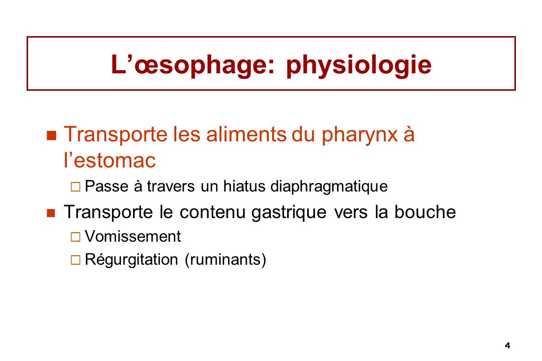 L'œsophage: physiologie