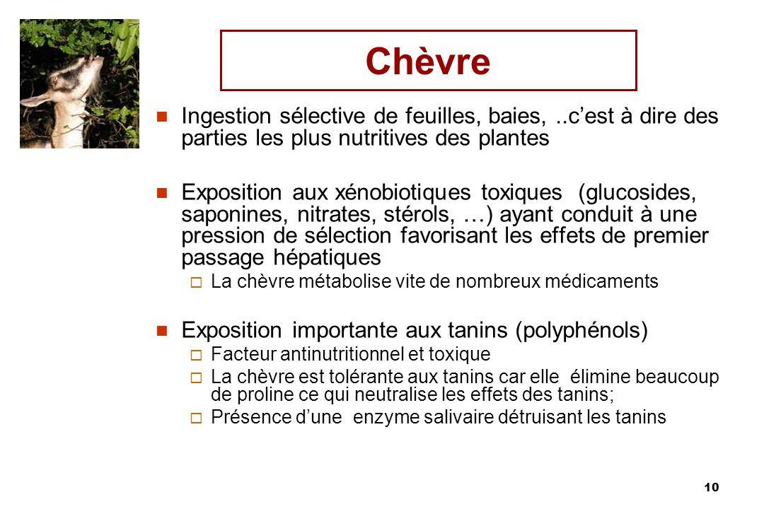 Chèvre Ingestion sélective de feuilles, baies, ..c'est à dire des parties les plus nutritives des plantes.
