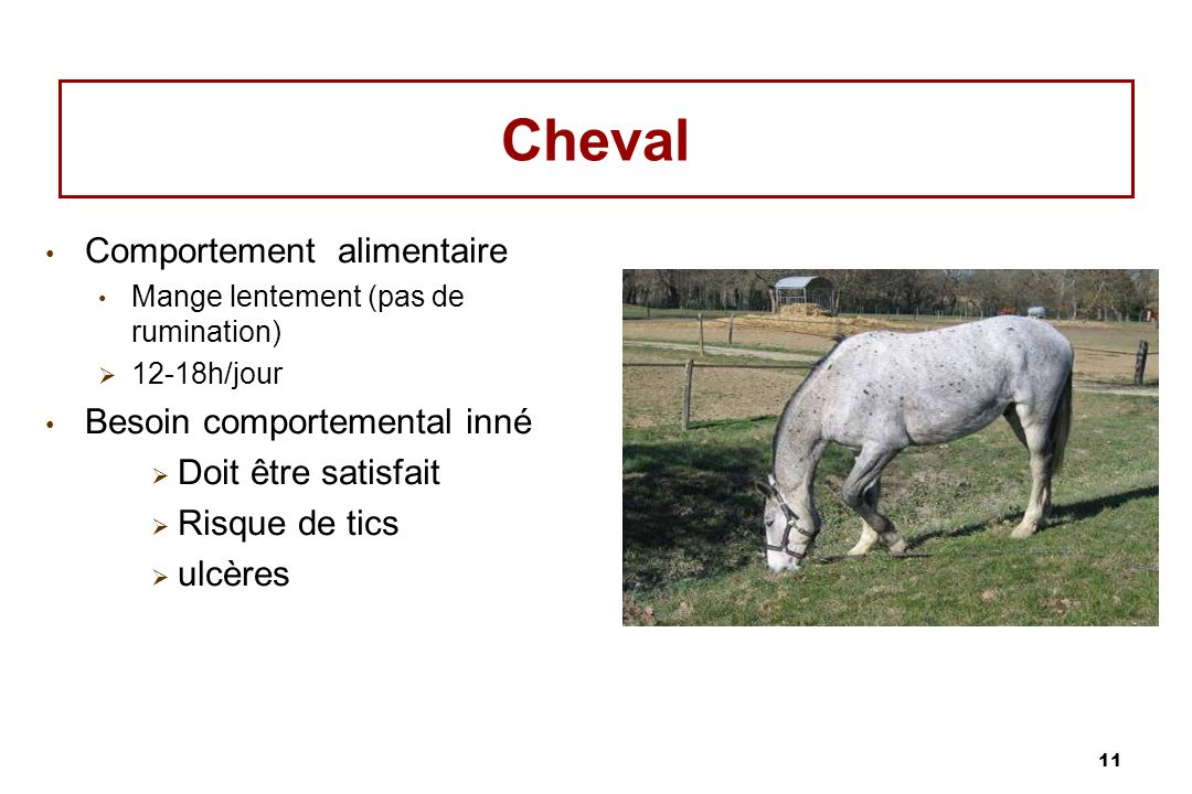 Cheval Comportement alimentaire Besoin comportemental inné