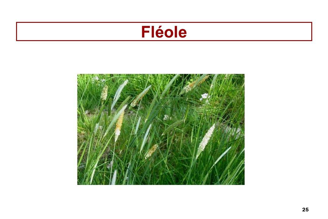 Fléole