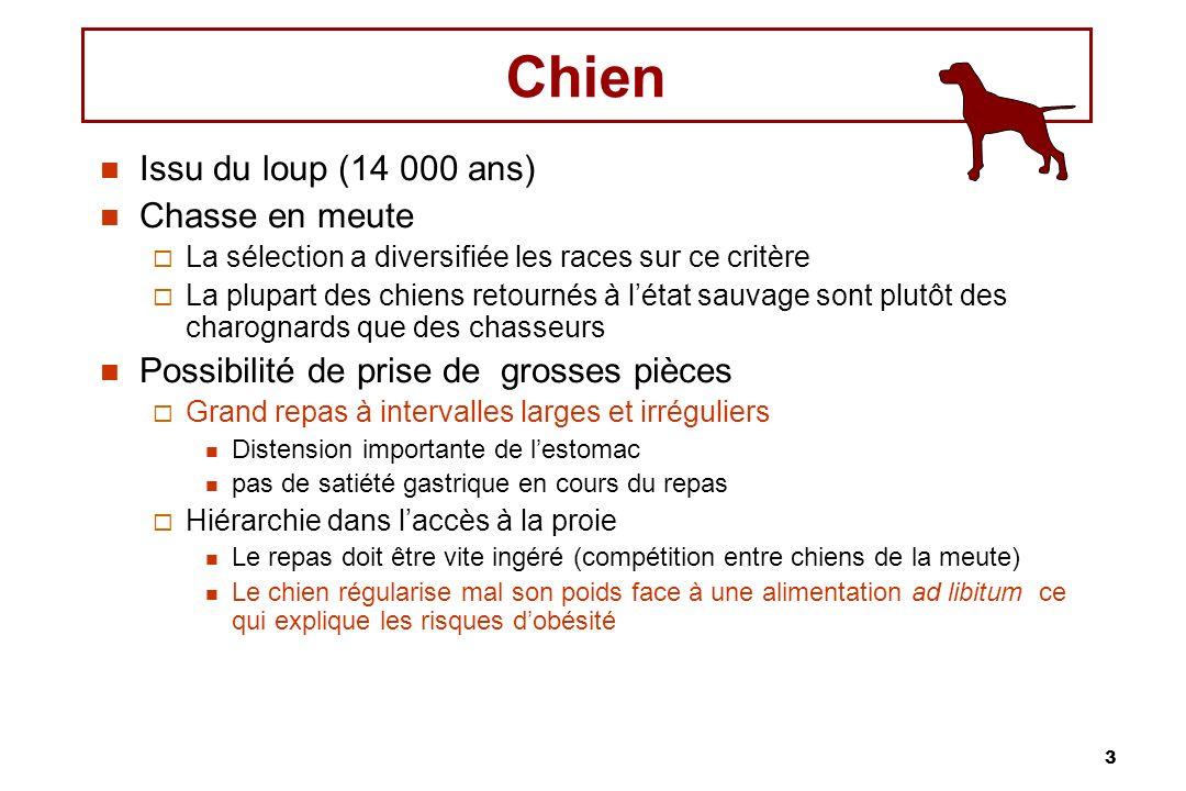 Chien Issu du loup (14 000 ans) Chasse en meute