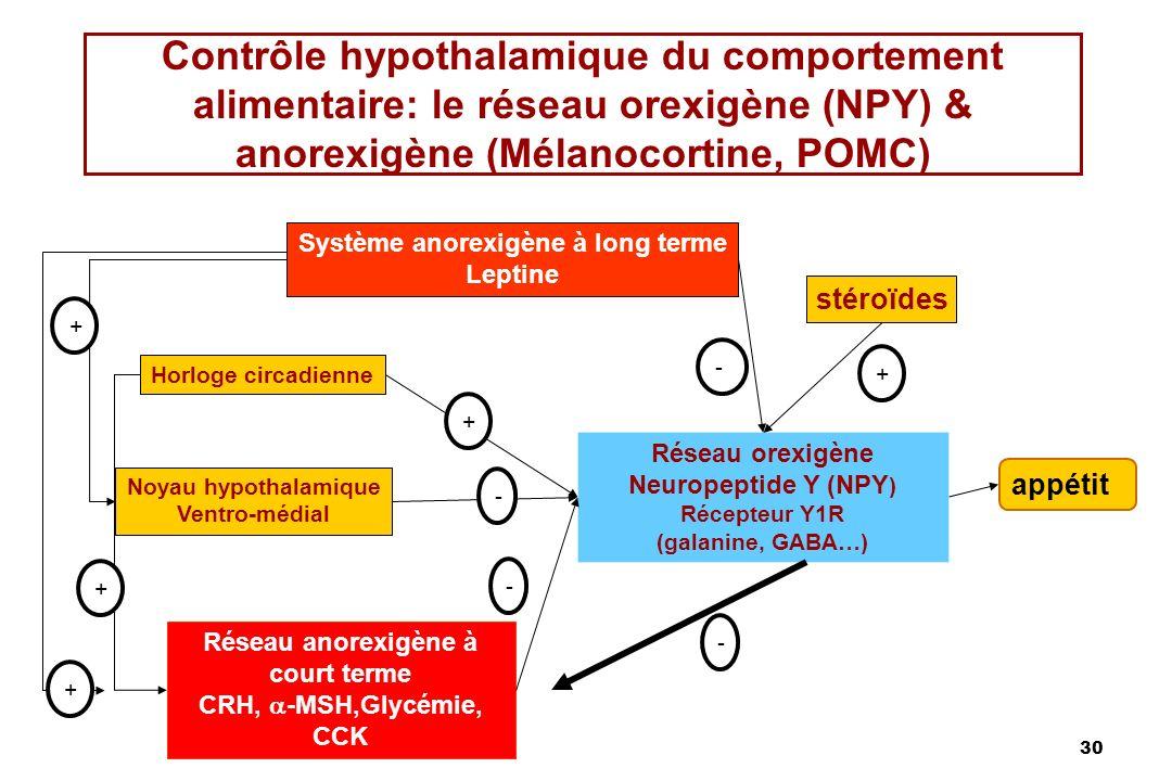 Système anorexigène à long terme Réseau anorexigène à court terme