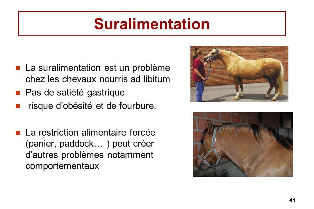 Suralimentation La suralimentation est un problème chez les chevaux nourris ad libitum. Pas de satiété gastrique.