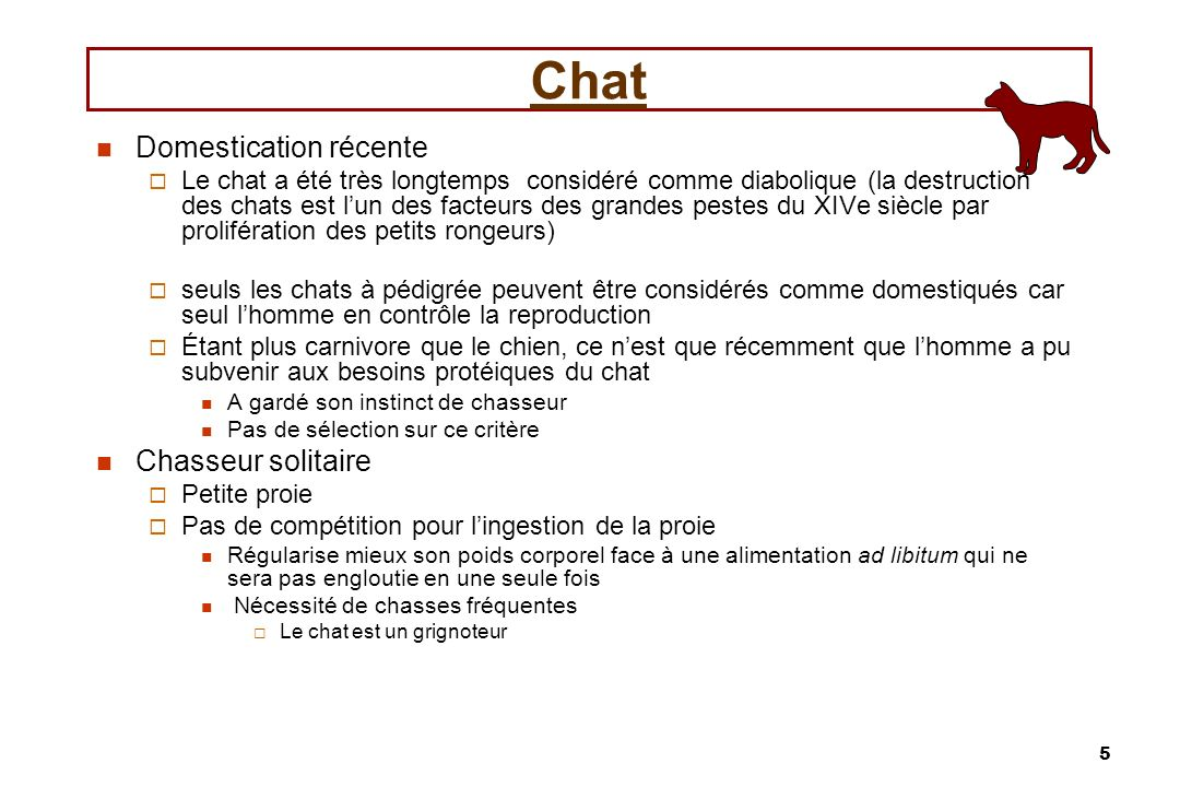 Chat Domestication récente Chasseur solitaire