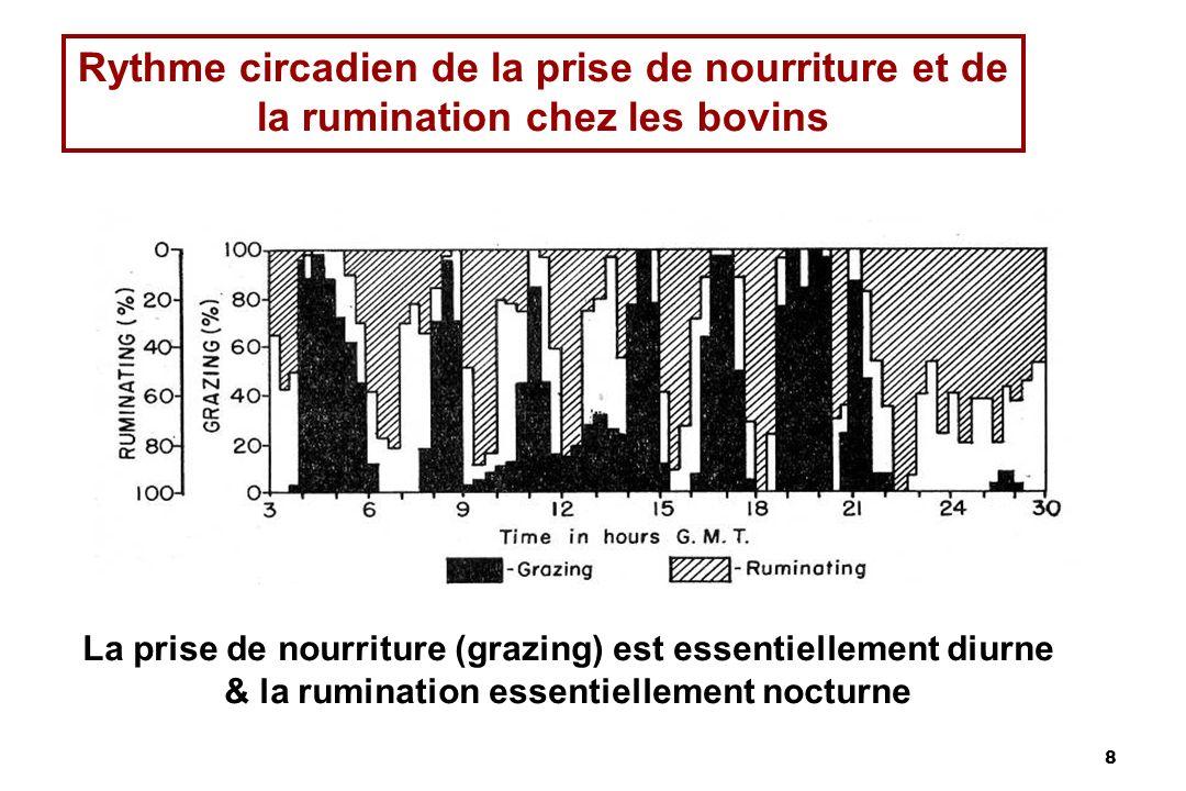 Rythme circadien de la prise de nourriture et de la rumination chez les bovins