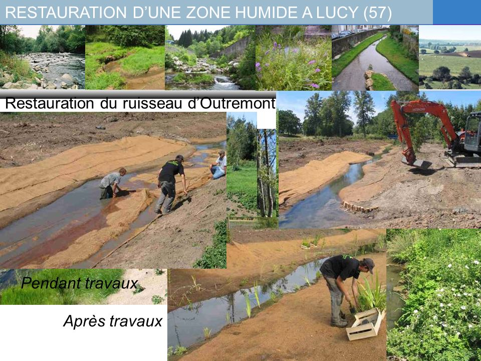 RESTAURATION D'UNE ZONE HUMIDE A LUCY (57)