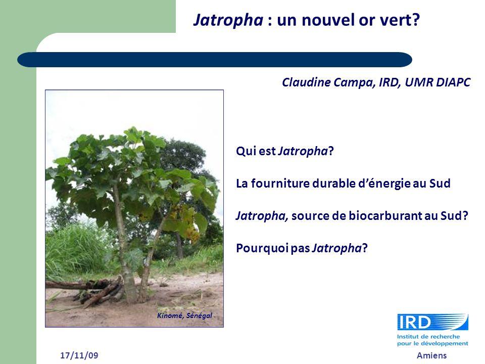 Jatropha : un nouvel or vert
