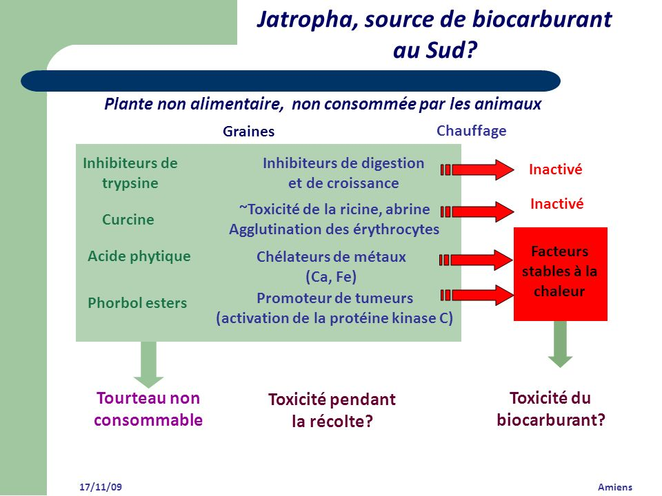Jatropha, source de biocarburant au Sud