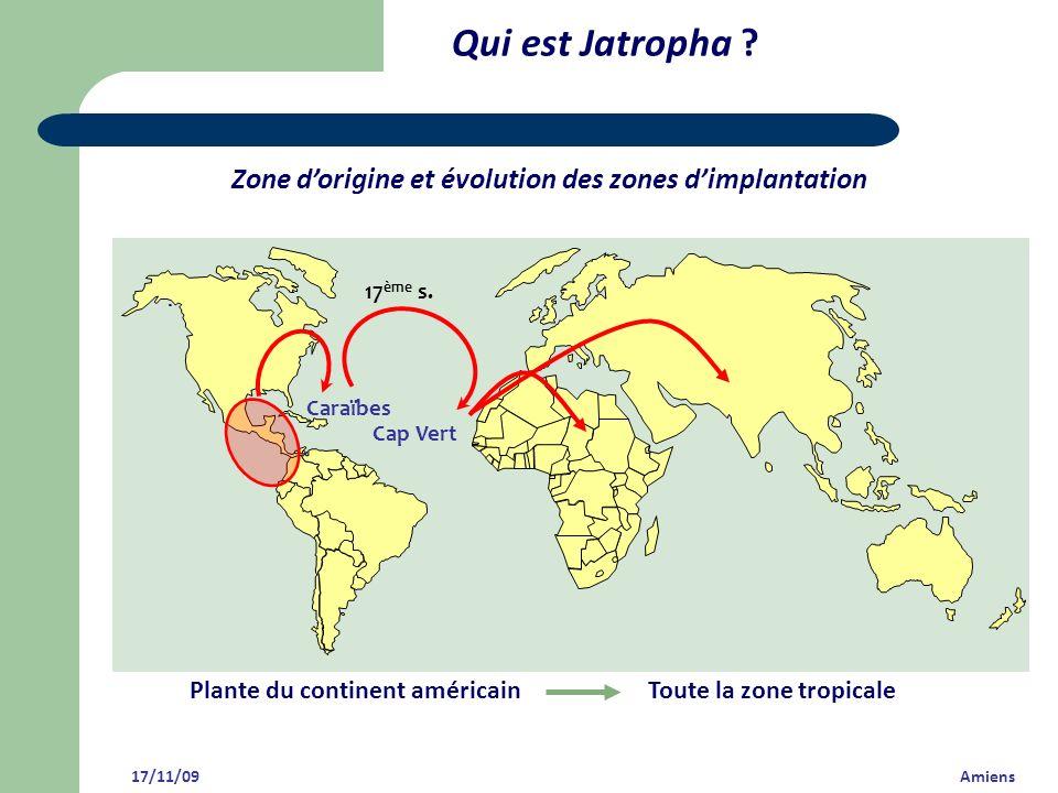 Qui est Jatropha Zone d'origine et évolution des zones d'implantation. Caraïbes. Cap Vert. 17ème s.