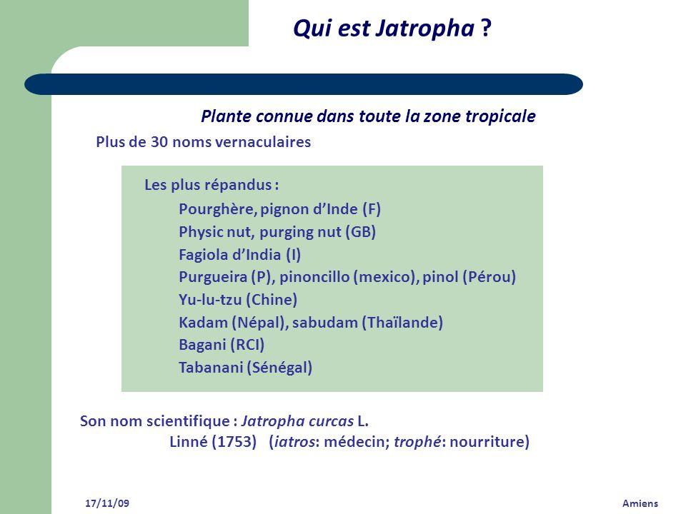 Qui est Jatropha Plante connue dans toute la zone tropicale