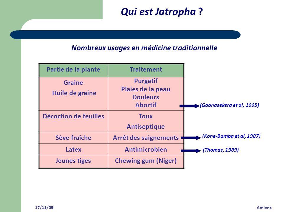Qui est Jatropha Nombreux usages en médicine traditionnelle