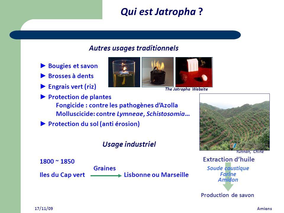 Qui est Jatropha Autres usages traditionnels Usage industriel