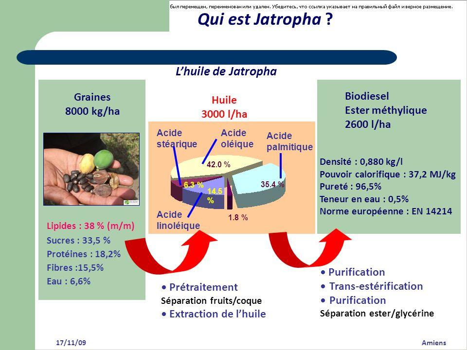 Qui est Jatropha L'huile de Jatropha Graines Biodiesel Huile