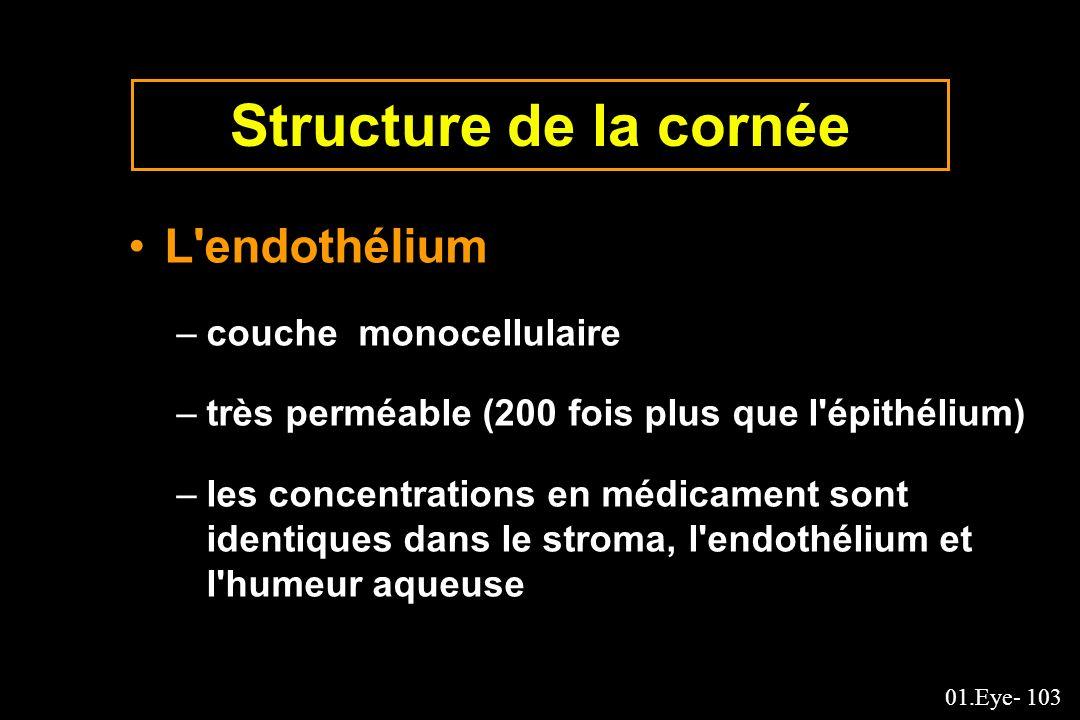 Structure de la cornée L endothélium couche monocellulaire