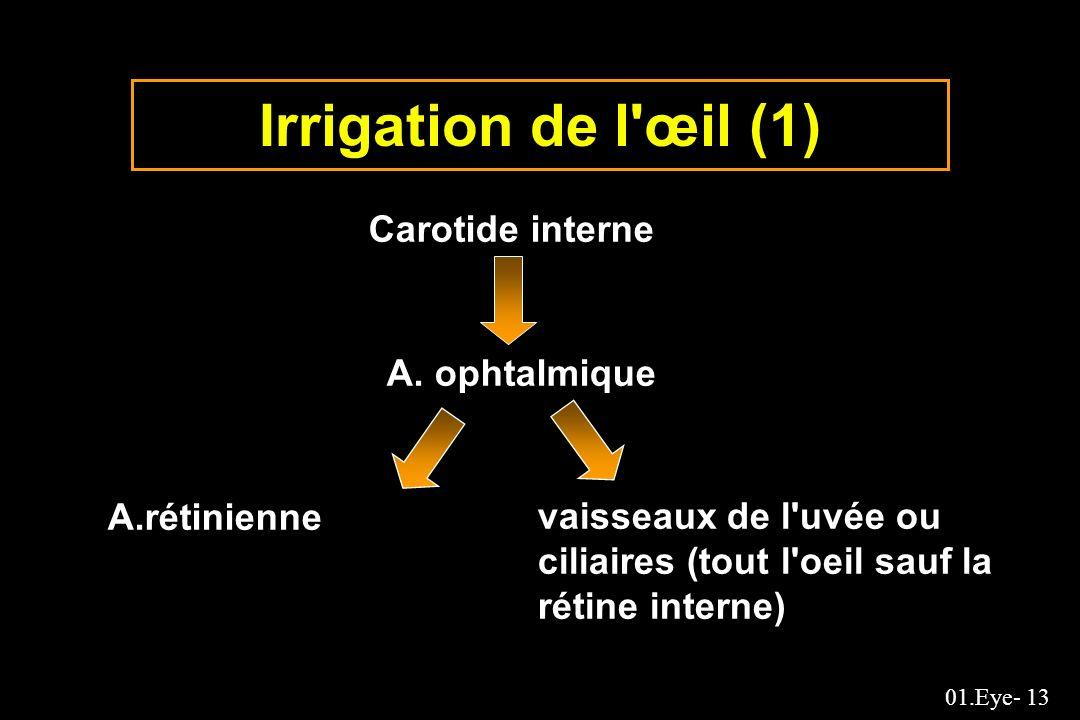 Irrigation de l œil (1) Carotide interne A. ophtalmique A.rétinienne