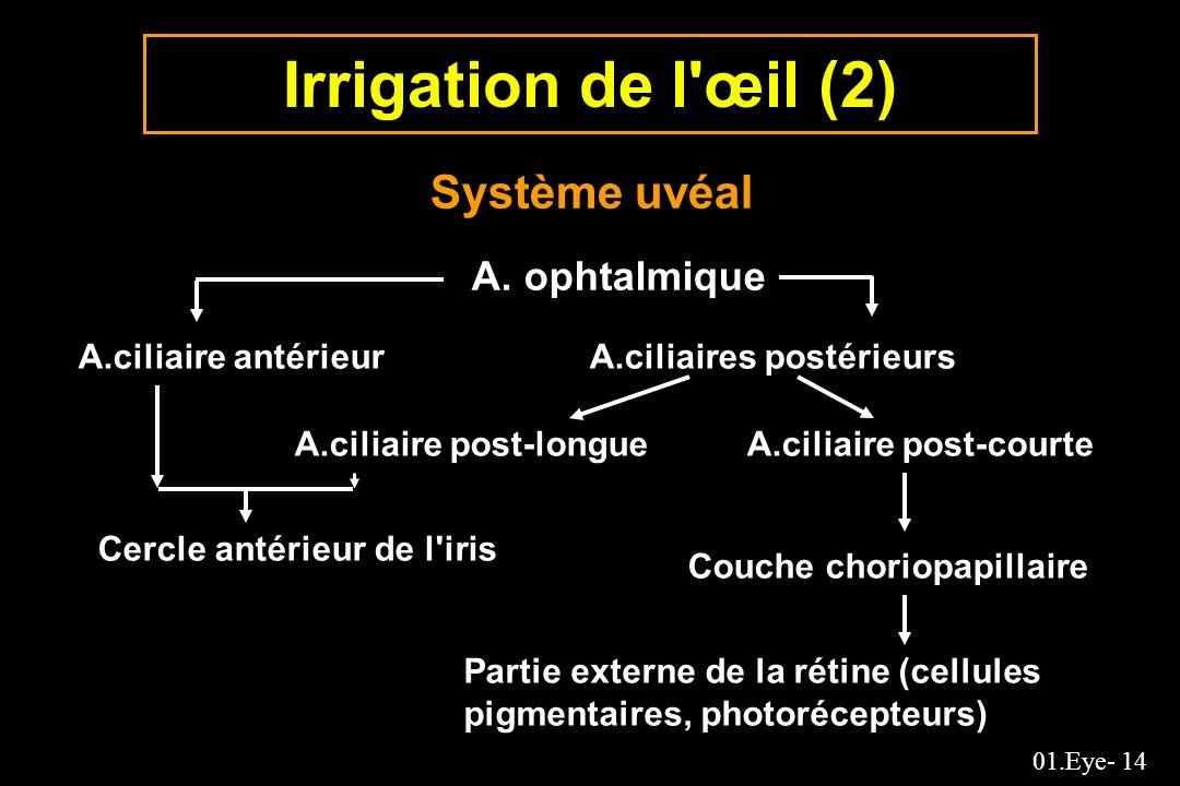 Irrigation de l œil (2) Système uvéal A. ophtalmique