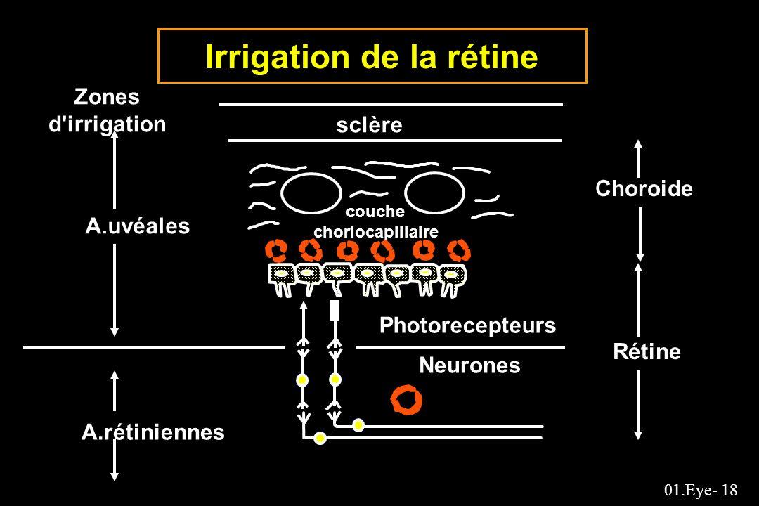 Irrigation de la rétine