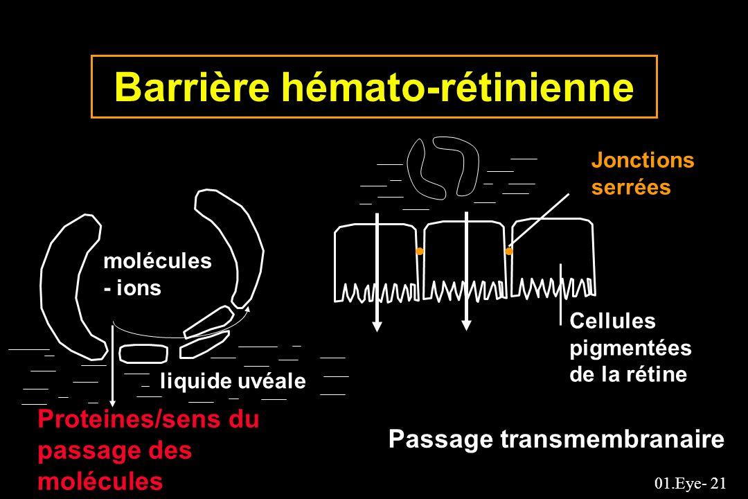 Barrière hémato-rétinienne