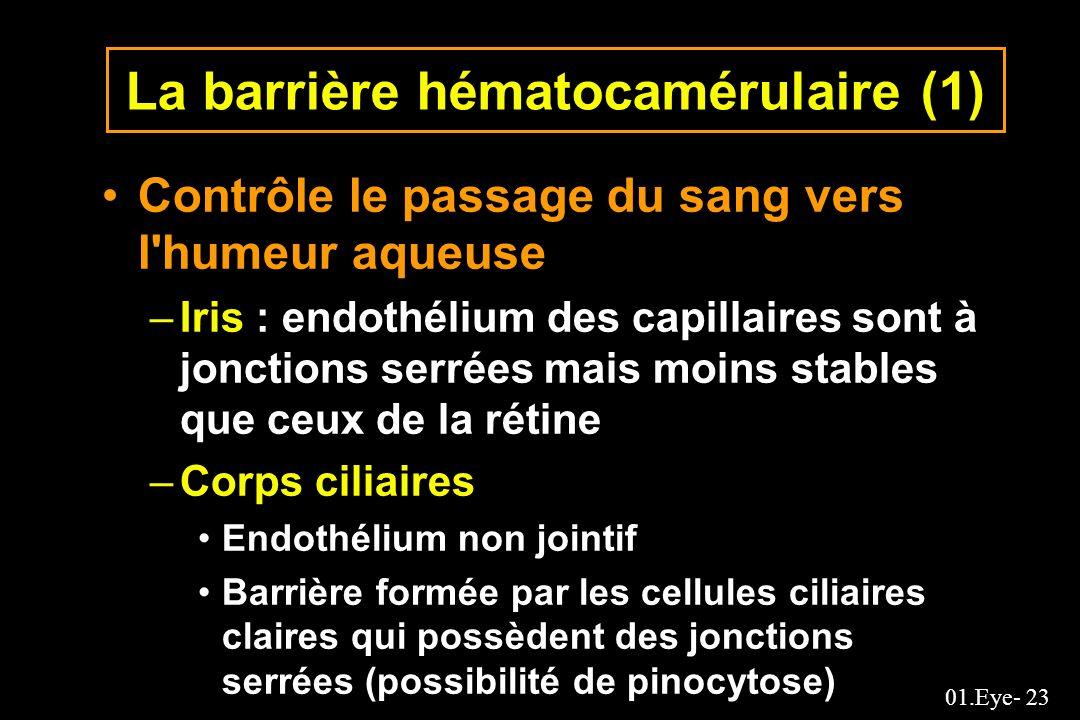 La barrière hématocamérulaire (1)