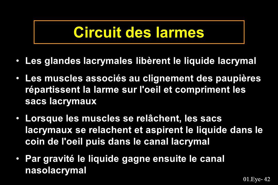 Circuit des larmes Les glandes lacrymales libèrent le liquide lacrymal