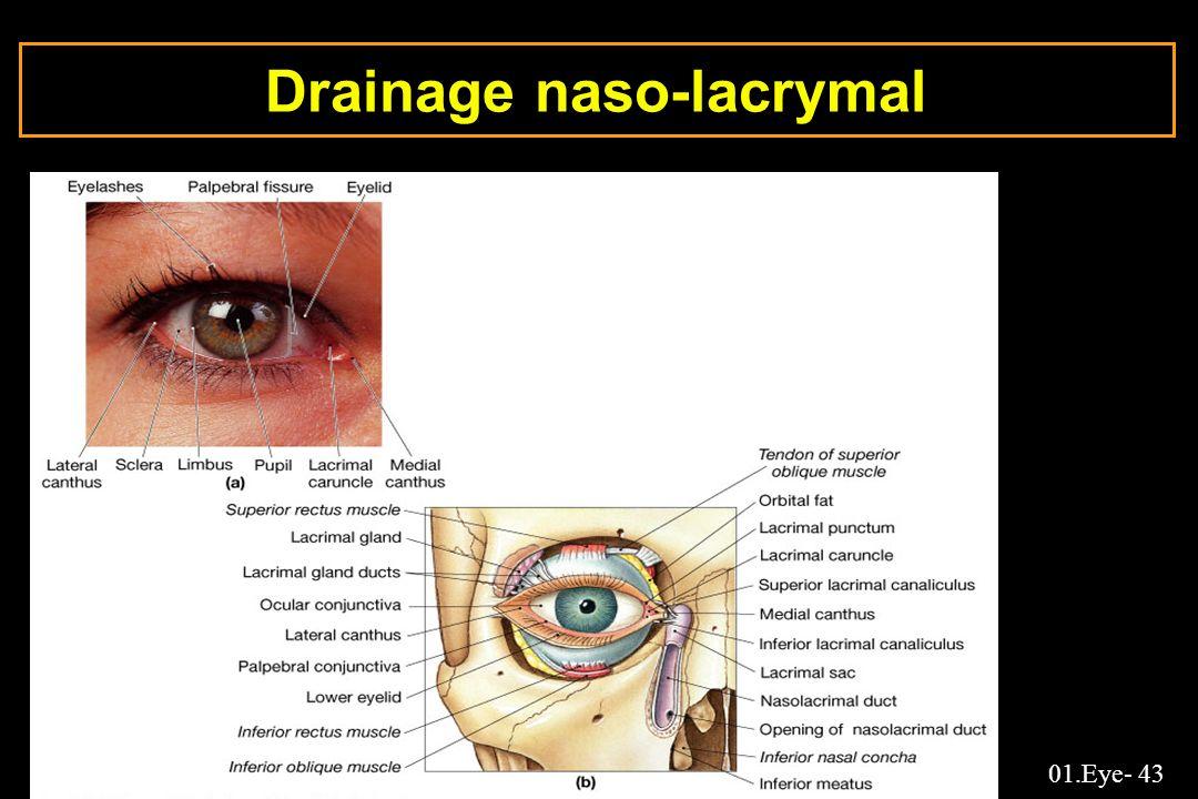 Drainage naso-lacrymal