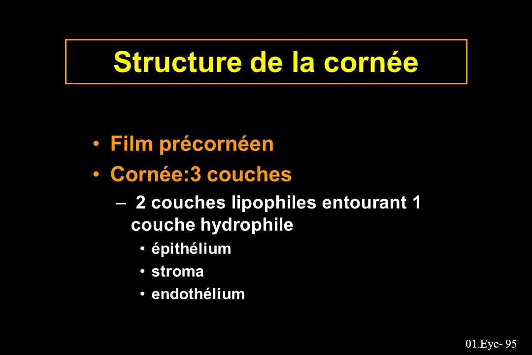 Structure de la cornée Film précornéen Cornée:3 couches
