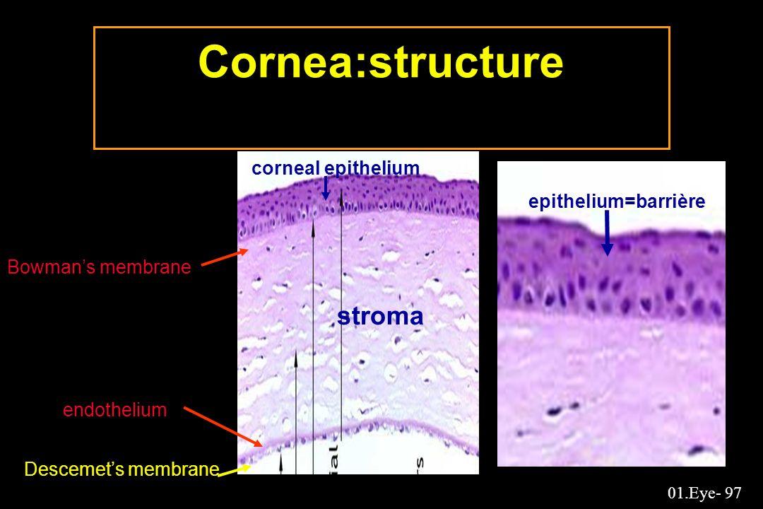 Cornea:structure stroma corneal epithelium epithelium=barrière