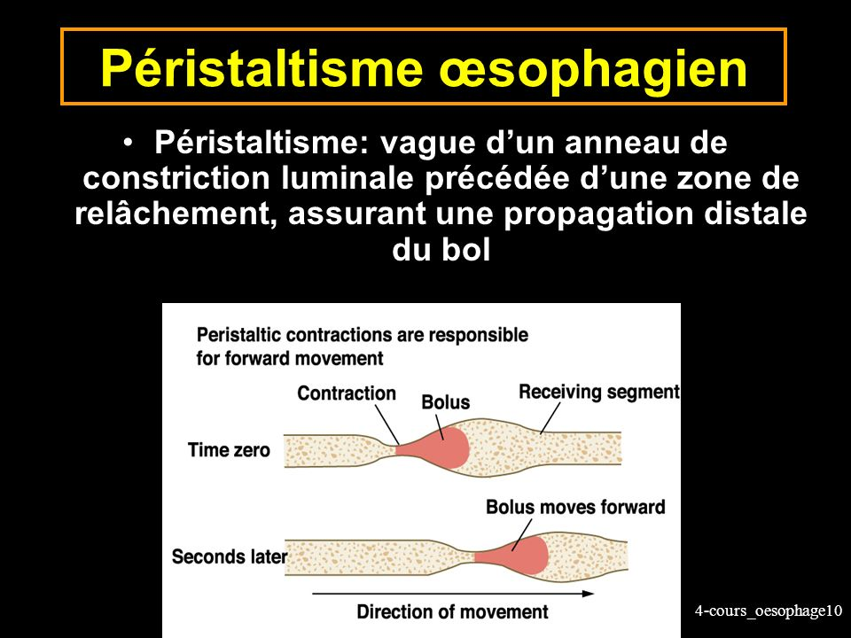 Péristaltisme œsophagien