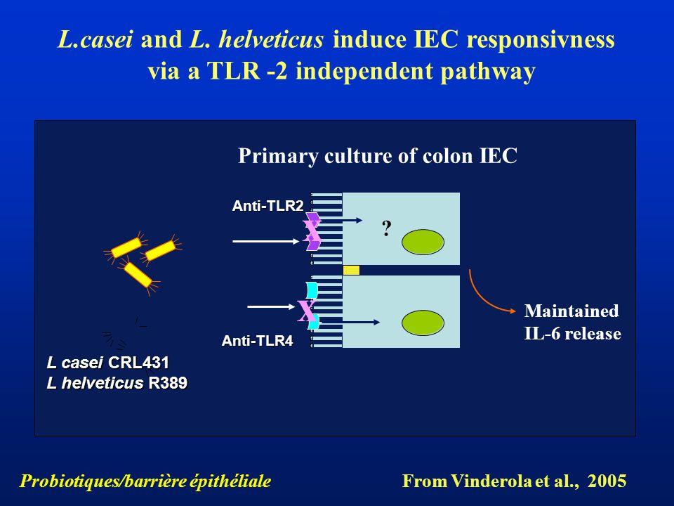 x x L.casei and L. helveticus induce IEC responsivness