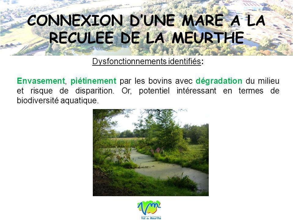 CONNEXION D'UNE MARE A LA RECULEE DE LA MEURTHE