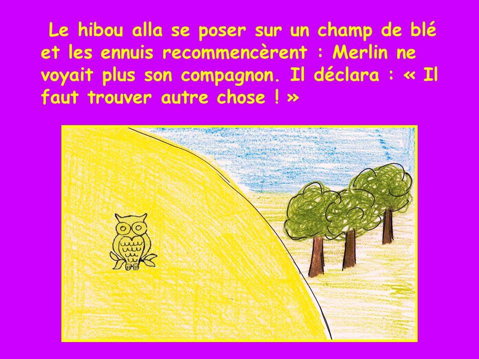 Le hibou alla se poser sur un champ de blé et les ennuis recommencèrent : Merlin ne voyait plus son compagnon.