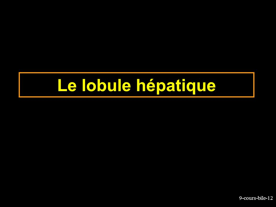 Le lobule hépatique