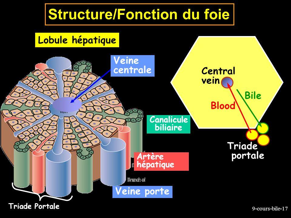 Structure/Fonction du foie