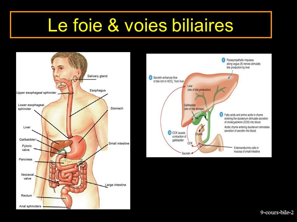 Le foie & voies biliaires