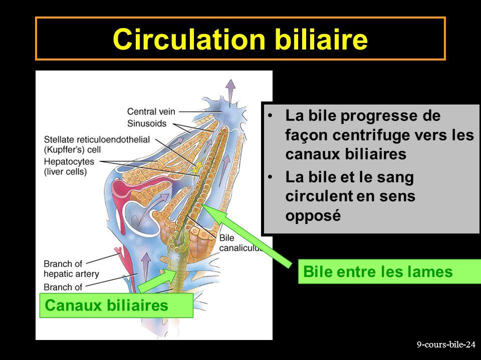 Circulation biliaireLa bile progresse de façon centrifuge vers les canaux biliaires. La bile et le sang circulent en sens opposé.