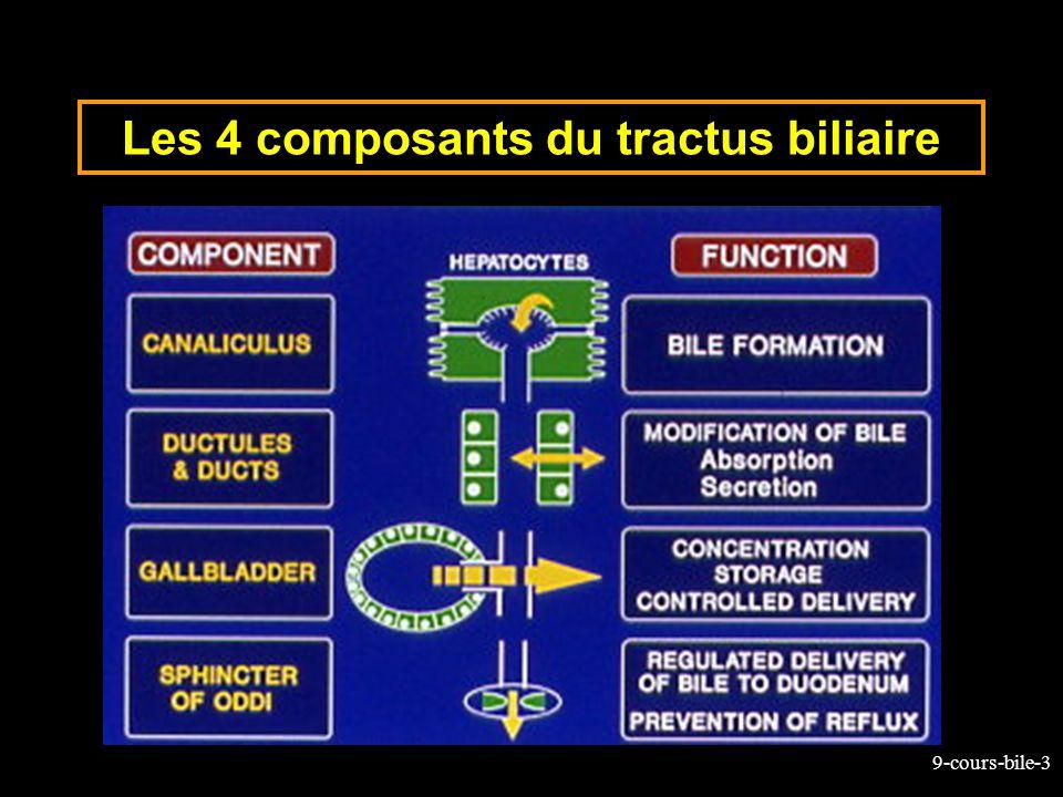 Les 4 composants du tractus biliaire