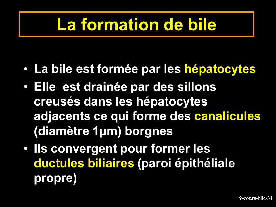 La formation de bile La bile est formée par les hépatocytes