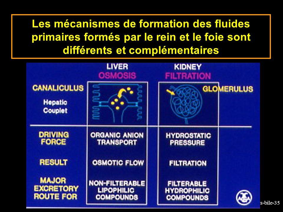 Les mécanismes de formation des fluides primaires formés par le rein et le foie sont différents et complémentaires