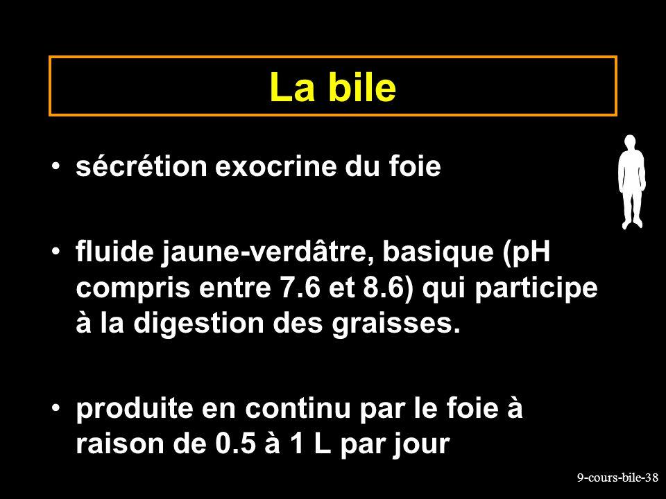 La bile sécrétion exocrine du foie