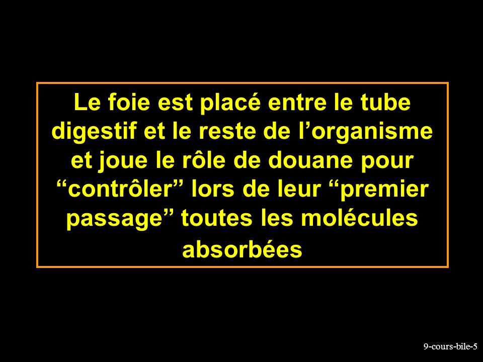 Le foie est placé entre le tube digestif et le reste de l'organisme et joue le rôle de douane pour contrôler lors de leur premier passage toutes les molécules absorbées