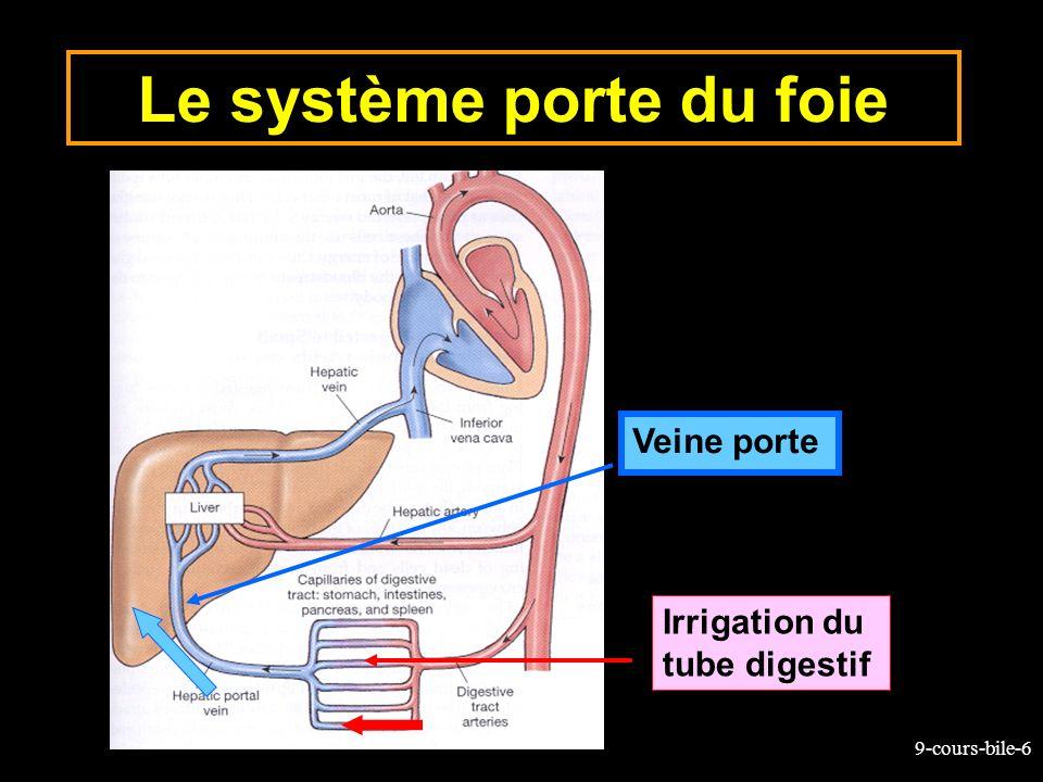 Le système porte du foie