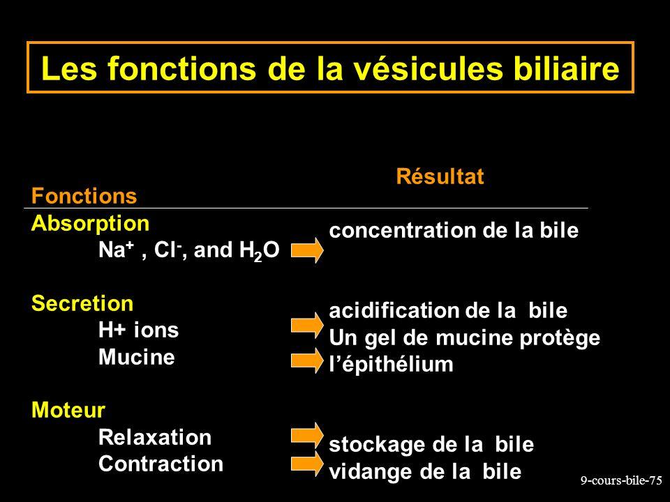 Les fonctions de la vésicules biliaire